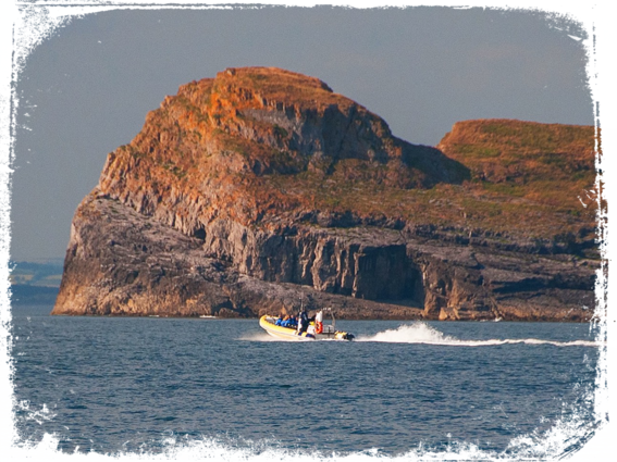 gower coast adventures boat worms head boat trip