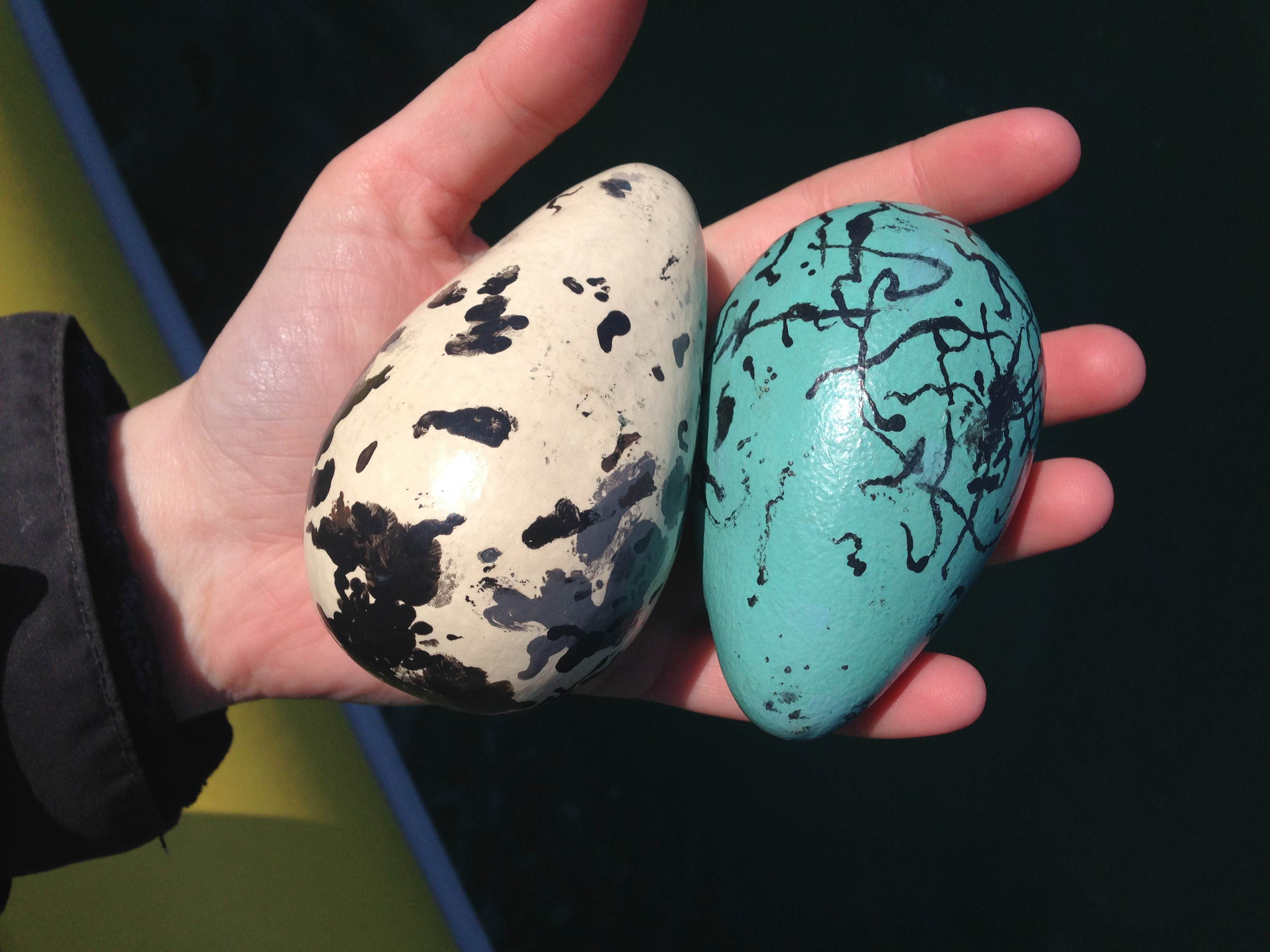 guillemot eggs models