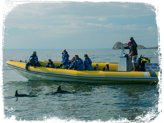 gower coast adventures boat trip with dolphins