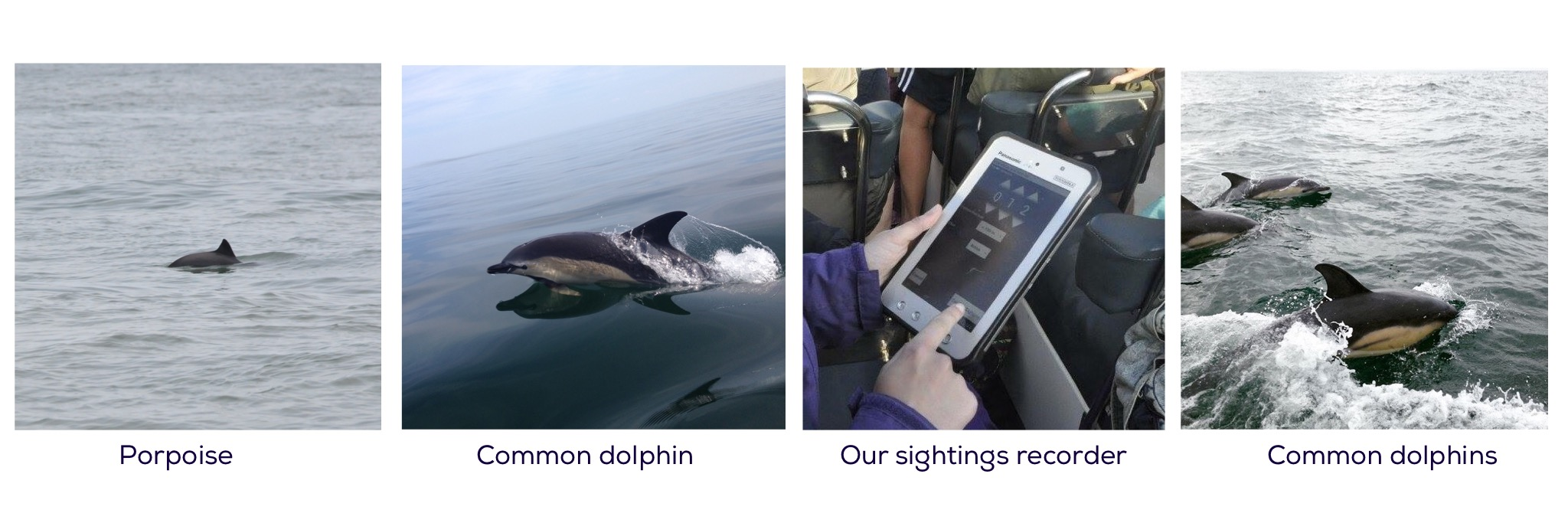 Recording porpoise and dolphin sightings on Gower from our boat